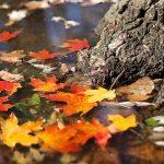 Złota jesień czy plucha i słota, czyli o wpływie Gwiazd na pogodę
